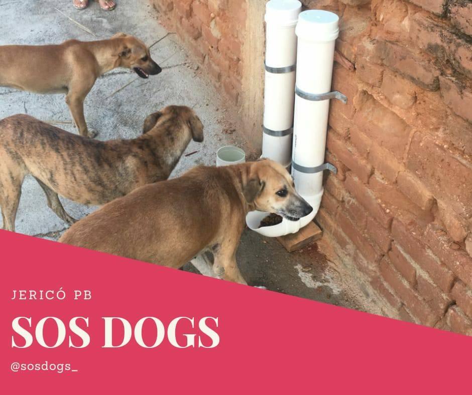 Voluntária do SOS Dogs pede doações de rações para animais de rua na cidade de Jericó; ouça