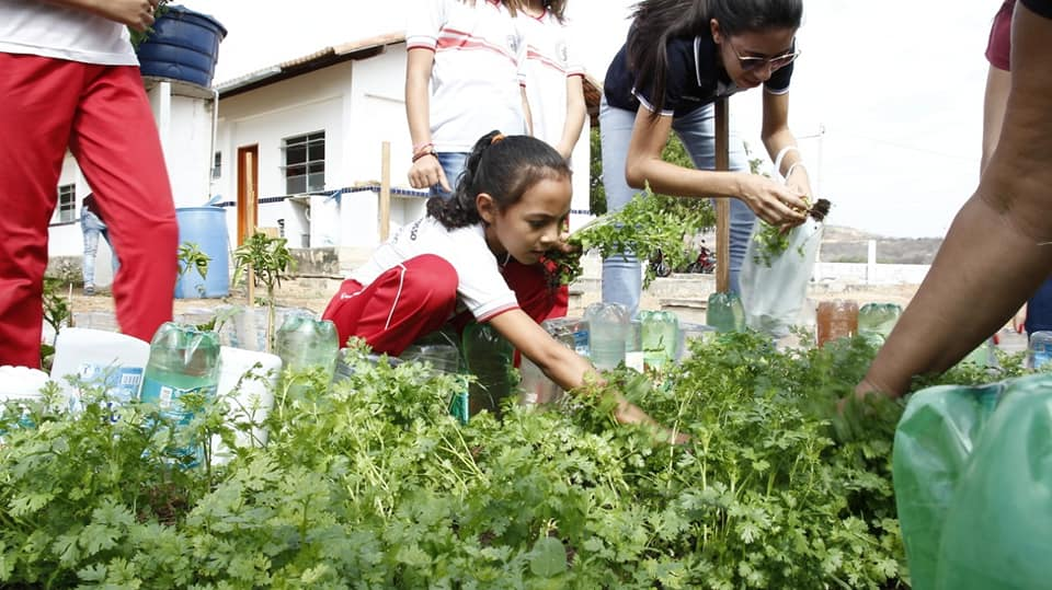 Escolas municipais de Mato Grosso recebem coentro da Horta Sustentável para preparo da merenda escolar
