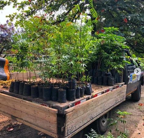 Prefeitura de São Bento distribuiu mais de 04 mil mudas de plantas nos últimos anos